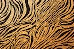 Animal Print Hologram (Black/Gold)