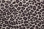 Printed Sheer (Black/Gray/Multi)