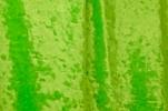 Stretch Crushed Velvet (Lime)