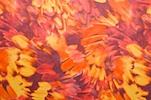 Printed Spandex (Orange/Burgundy/Multi)