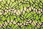 Knit Cut Out (Metallic) (Black/Lime tie dye)
