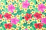 Floral Prints (Red/Green/Pink/Multi)
