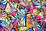Abstract print (Black/Fuchsia/Blue/Orange/Multi)
